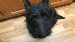 Dooley Is Looking For His Forever Home