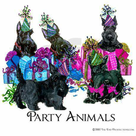 Scottish Terriers are party animals!